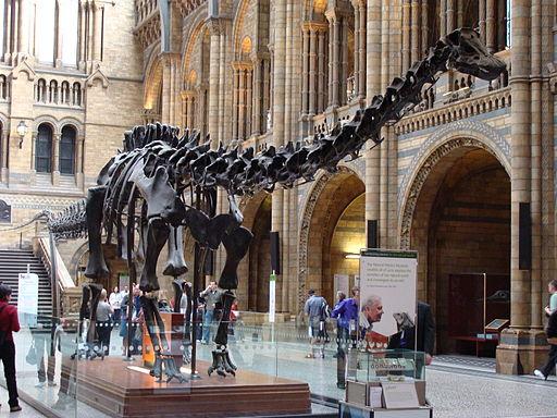 Diplodocus Skeleton London Museum