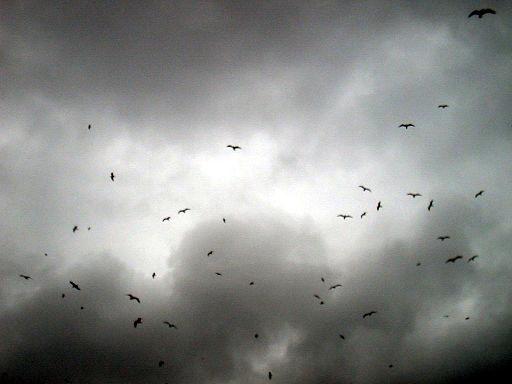 Birds against darkened sky
