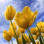 Springtime Poems